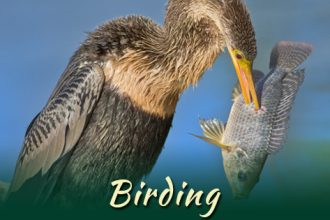 Birding_pic