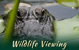 wildlife_viewing_pic